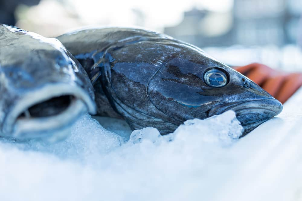 black cod vs cod